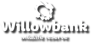 Job Opportunities - Willowbank Wildlife Reserve & Restaurant